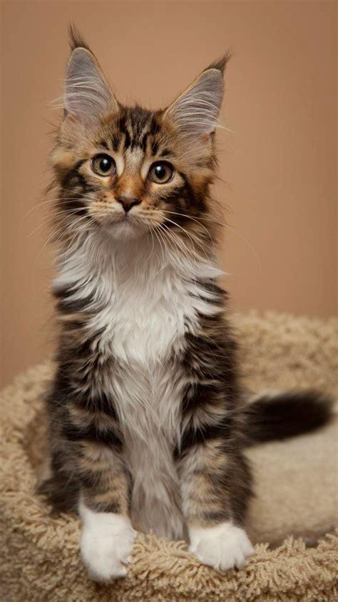 Cat Breed Temperaments  Cats Types