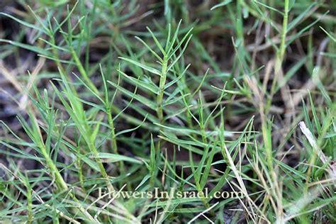 Plant Id Specimen List (n/l) At Oakleaf High School
