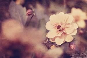 Vintage Flower   sandra.scherer   Flickr