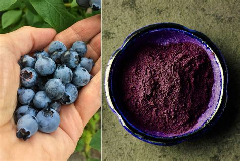 Everything You Need to Know About Blueberry Powder Today