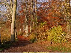 fond d39ecran automne chatoyant With forum plan de maison 13 fond decran feuilles dautomne