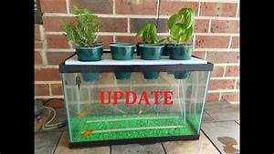 Update My Diy Aquaponics Aquarium Project 6 Month Update