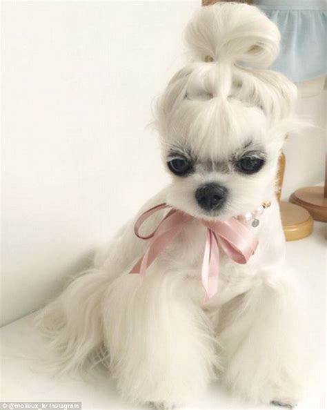 miho  malteses enviable hairstyles