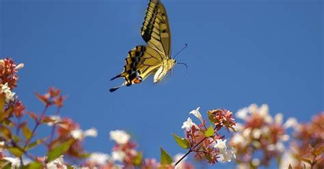 foto kupu kupu cantik