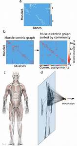 Structure  Function  And Control Of The Human
