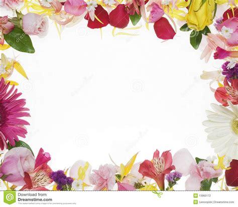 flower border stock photo image  yellow background