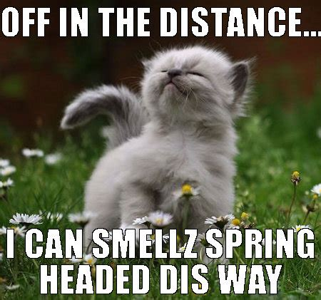 Spring Memes - 30 adorable cats and kittens enjoying spring charityowl