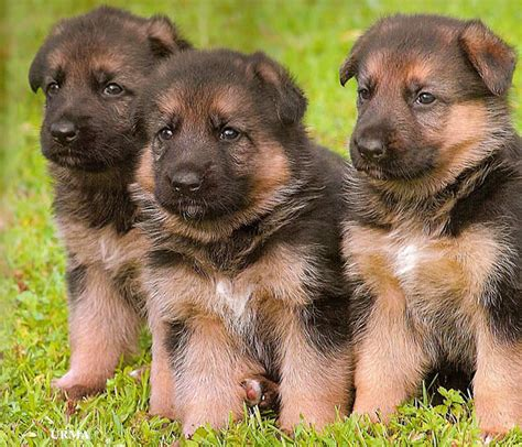 Pet Pantry Nc by German Shepherds Dog Clothing Products News And