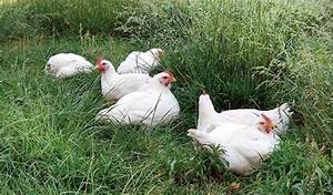 Raising Chickens for Meat: DIY Pastured Poultry | MOTHER ...