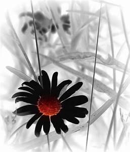 Kleiderschrank Schwarz Weiß : schwarz weiss rot bilddatenbank bilder kostenlos und lizenzfreie fotos slideshow ~ Markanthonyermac.com Haus und Dekorationen