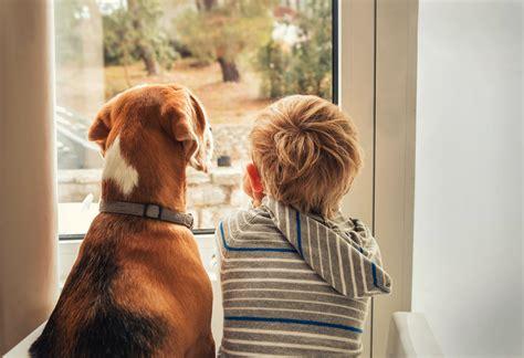 Top   Ee  Benefits Ee   Of Having A  Ee  Dog Ee   Around The House