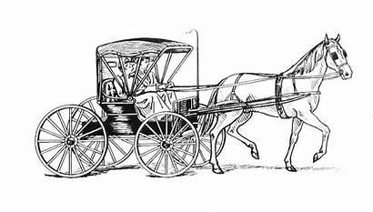 Horse Drawn Carriage Historic Vehicle Pelham Multi