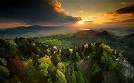 Desktop Wallpapers Mountain Forest Sunset