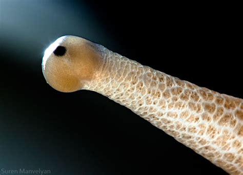close    animal  human eyes designtaxicom