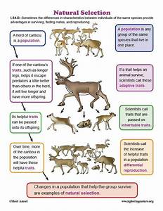 Learn About Animals And Natural Selection On