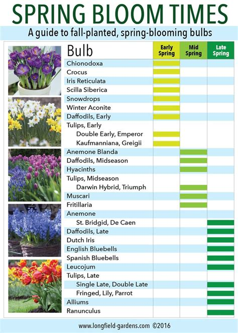 92 best images about bulbs in the garden rhizomes