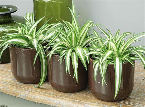 plantes de bureau sans soleil des plantes aux vertus dépolluantes pour votre intérieur