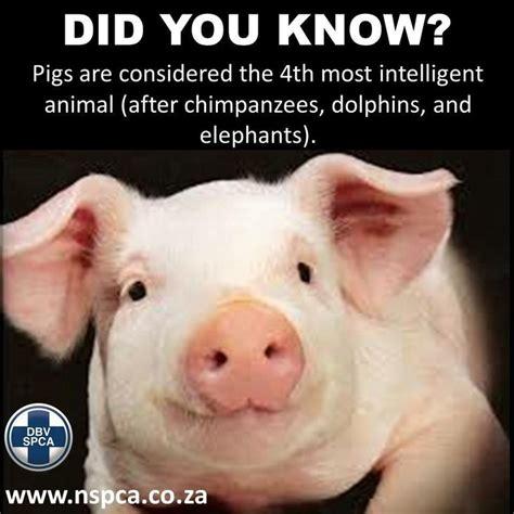 Pig Memes - 26 best vegan memes images on pinterest vegan memes vegans and animal rescue