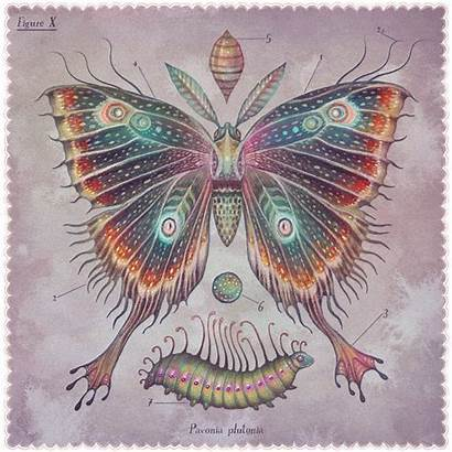 Lenticular Moths Vlad Stankovic Piccalilli Illustrations Gouache