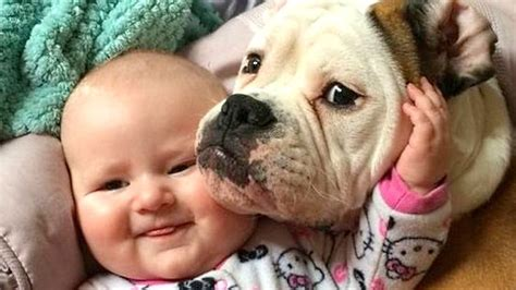 babies laughing  dogs compilation  youtube