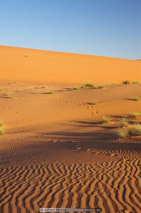 Vegetation on sand dunes photo. Sand dunes, Wahiba desert ...