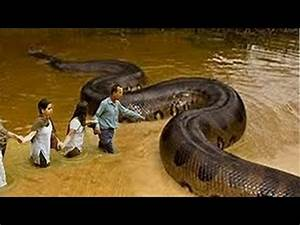 WORLD LARGEST SNAKE ANACONDA FOUND IN AMAZON RIVER- New ...
