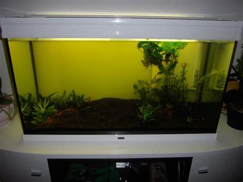 mise en eau aquarium probleme apparition algues