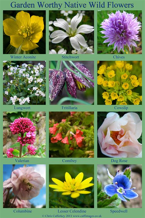 where do flowers grow 12 wild flowers to grow in a nature garden earth and hearth