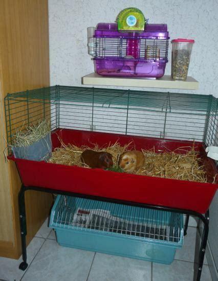 dans mon bureau cages dans mon bureau 2011