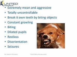 dog rabies symptoms