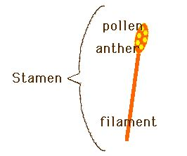 Part Of A Scatter Diagram