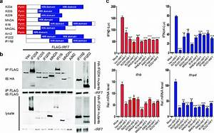 Conserved Function Of P200 Family Proteins In The