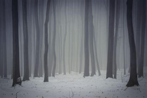 dark foggy forest  winter custom wallpaper