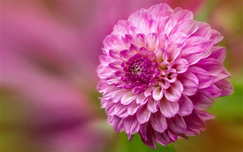 Check spelling or type a new query. Beautiful Single Flower Wallpaper HD Download - HD Wallpapers