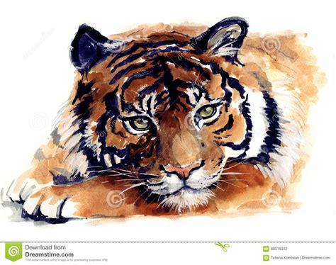 watercolor tiger wild animal illustration stock