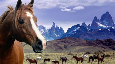 Horse Desktop Wallpaper Themes