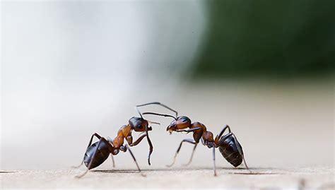 kollaps im insektenstaat scienceorfat