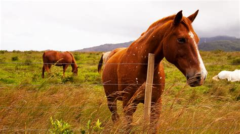hawaii horse animals dogs moving horses pets cats allowed birds besides transported