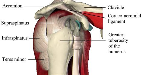 Why Isn't My Rotator Cuff Tear Healing After Physical