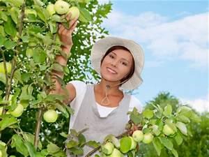 Apfelbaum Wann Schneiden : richtig apfelbaum schneiden und die richtige bildung der apfelbaumkronen haben zur folge dass ~ Frokenaadalensverden.com Haus und Dekorationen