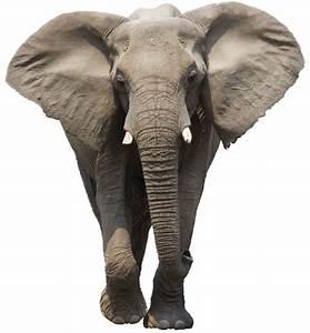 Interpretation of a dream in which you saw «Elephant»
