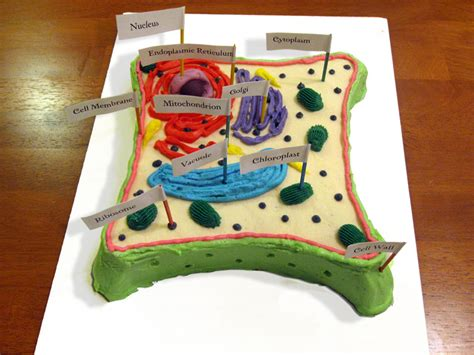 plant cell cake model how to make plant cell 3d model front yard landscaping