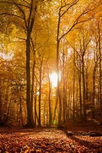 Mot cle quotpaysagesquot for Ordinary couleurs chaudes couleurs froides 8 le lac des gaillands en automne
