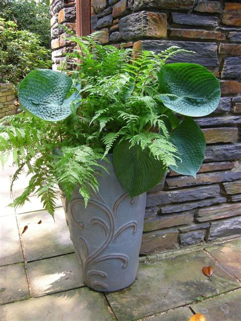 shade container gardening ideas simple but