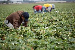 As Food and Farmworkers Retreat, Guestworker Program ...