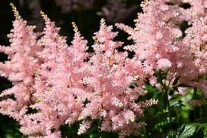 Plante Balcon Facile D Entretien : blogue un jardin facile d 39 entretien ~ Melissatoandfro.com Idées de Décoration
