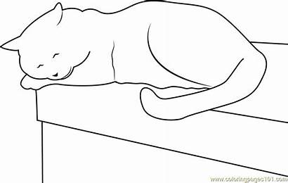 Cat Coloring Sleeping Table Pages Down Laying