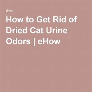 how to get rid of the smell of cat urine urine odor With how to get rid of odors in house