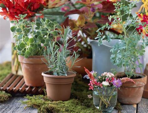 3 Gardening Ideas For Balcony And Make It Look Awesome