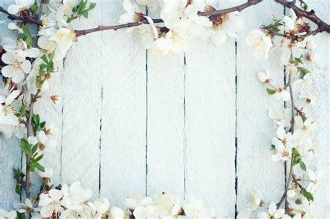 fiori di prugna prugna fiore fiore ciliegio scaricare foto gratis
